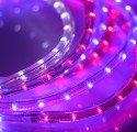 2-х жильный светодиодный дюралайт
